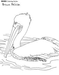 brown pelican coloring free printable coloring pages