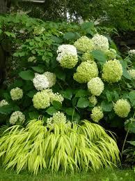 Flower Area - best 25 shade garden ideas on pinterest shade plants shade