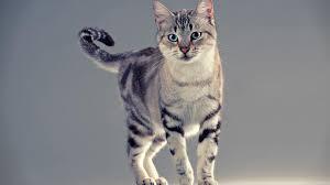 cute cat 1080p wallpaper unique hd wallpapers litle pups