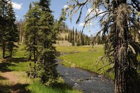 Christmas Tree Permits Colorado Buffalo Creek by Arizona Hiking Thompson Trail 629