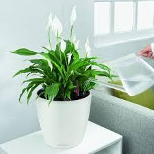 Indoor Plant Vases Flower U0026 Plant Pots
