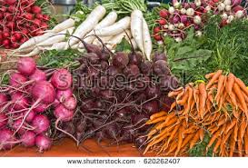 A Root Vegetable - root vegetable stock images royalty free images u0026 vectors