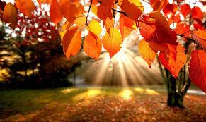 autumn pumpkin wallpaper widescreen autumn clipart widescreen clipground