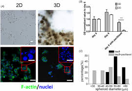 three dimensional printing of hela cells for cervical tumor model