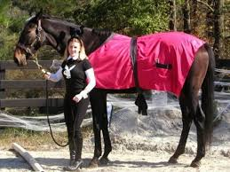 10 Halloween Costume Ideas For Your Horse Pictures Fun And