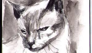 drawing of shoko the siamese cat in ballpoint pen one drawing daily