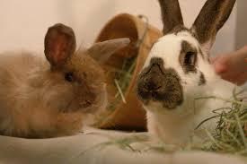 rabbit wranglers nonprofit in pittsburgh pa volunteer read