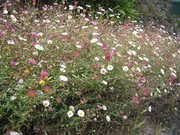 Bush Rock Garden Edging by Wildflowers The Trees U0026 Flowers Of Whangarei