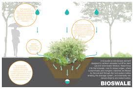 native prairie plants illinois native plants reduce flooding six ways moss design