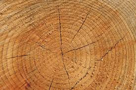 wood tree rings images Wood tree rings background stock image image of macro 253165 jpg