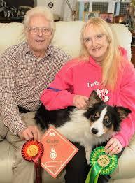 australian shepherd crufts 2016 no dog u0027s life for crufts champion news farnham herald