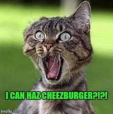 I Can Haz Meme Generator - th id oip ya7oen xbsrq5tgt4jyciqaaaa