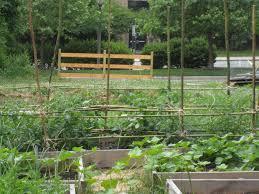 Bamboo Cucumber Trellis 40 Diy Homemade Structures To Plant Vines Trellis Arbor Pergola