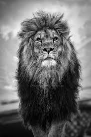 best 25 lion of judah ideas on pinterest lion of judah jesus
