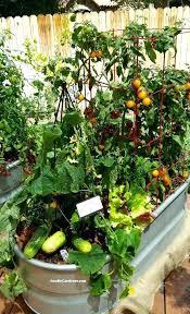 Fall Vegetable Garden Ideas Growing A Vegetable Garden For Dummies Financeintl Club