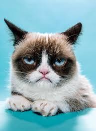Grumpy Cat Monday Meme - boom brands 2013 grumpy cat new york magazine