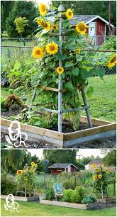 build a garden trellis 20 easy diy trellis ideas to add charm and functionality to your