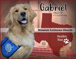 Comfort Golden Comfort Dog Messiah Lutheran Church