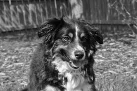 services u0026 rates u2014 endless wags pet sitting dog walks pet