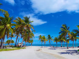 apartments apartments and condos for rent in miami