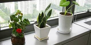 plants for office desk 5 reasons to have lovely plants at office desk giftalove com