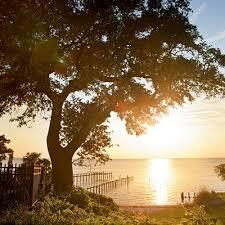 Alabama how fast does light travel images 217 best trees of alabama images fast growing trees jpg