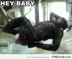 Funny Gorilla Memes - tgif funnies a last waltz before the weekend pmslweb