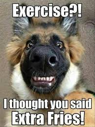 Dodg Meme - 25 dog meme that will definitely brighten your day sayingimages com