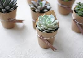 succulent wedding favors diy succulent wedding favors weddings by lilly