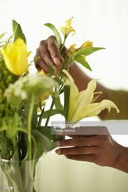 Arranging Roses In Vase Senior Woman Arranging Flowers In Vase Closeup Of Hands Stock