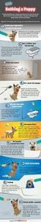 How To Clean House Fast bathing a puppy simple guidelines by fast dogs