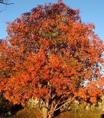 vivid fall color