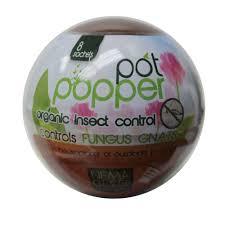 beneficial nematode fungus gnat control for indoor plants 4004220