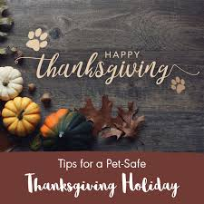 tips for a pet safe thanksgiving