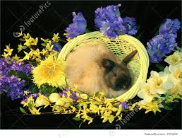 fuzzy easter easter bunny in basket picture