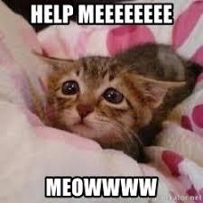 Sad Kitty Meme - help meeeeeeee meowwww sad kitty cat meme generator