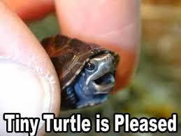 Ninja Turtle Meme - baby ninja turtle meme by jackfae memedroid