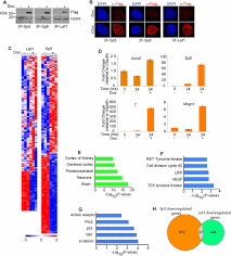 3f si e social sp5 and sp8 recruit β catenin and tcf1 lef1 to select enhancers to