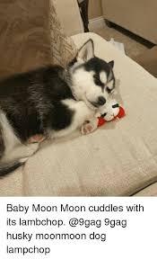 Moon Moon Meme - baby moon moon cuddles with its lambchop 9gag husky moonmoon dog