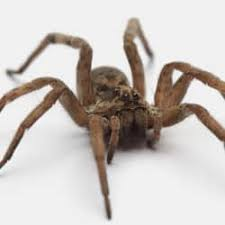 spider problems in your colorado home