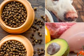 bench field pet foods llc top 24 best organic dog foods and what to know before buying