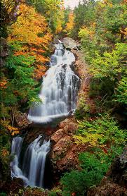New Hampshire forest images Crystal falls white mountain nat 39 l forest new hampshire jpg