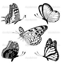 best 25 white butterfly ideas on butterfly
