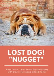 orange photo lost dog flyer templates by canva