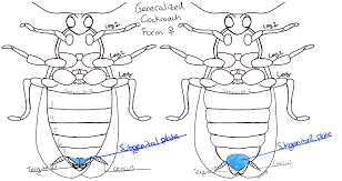 sisters u2013 roaches mantises entomologist