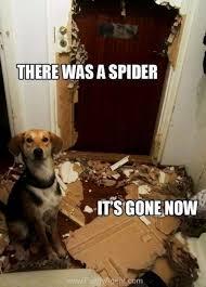 I Saw A Spider Meme - omg spiders 24 pics
