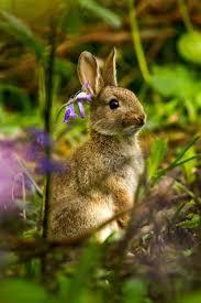 top 91 rabbit hd animal spot
