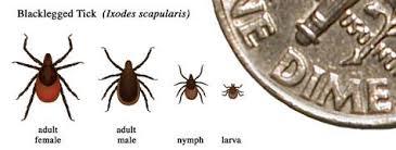 Ticks In Backyard It U0027s Tick Season Here U0027s What You Need To Know Michigan Radio