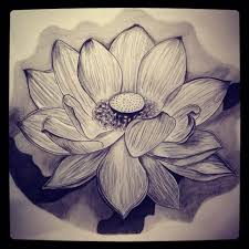 pencil drawing of lotus flower pencil drawing collection
