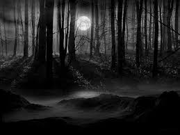 secluded dark woods wallpaper hd wallpapers